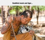 Buddhist Monk And Tiger...