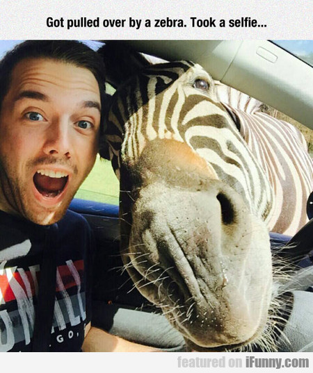 Got Pulled Over By A Zebra. Took A Selfie...