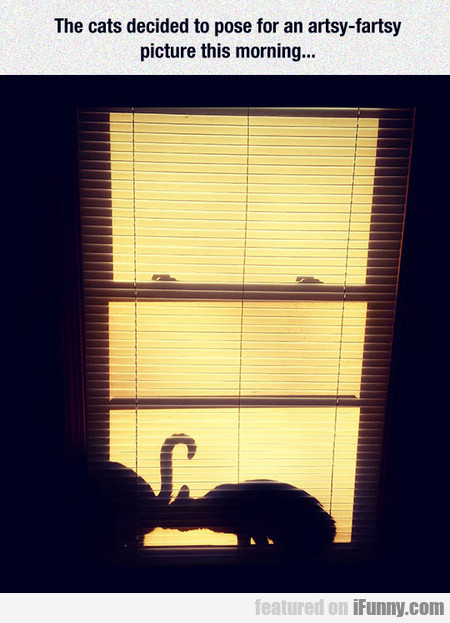 The Cats Decided To Pose For An Artsy-fartsy Image