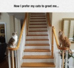 How I Prefer My Cats To Greet Me...