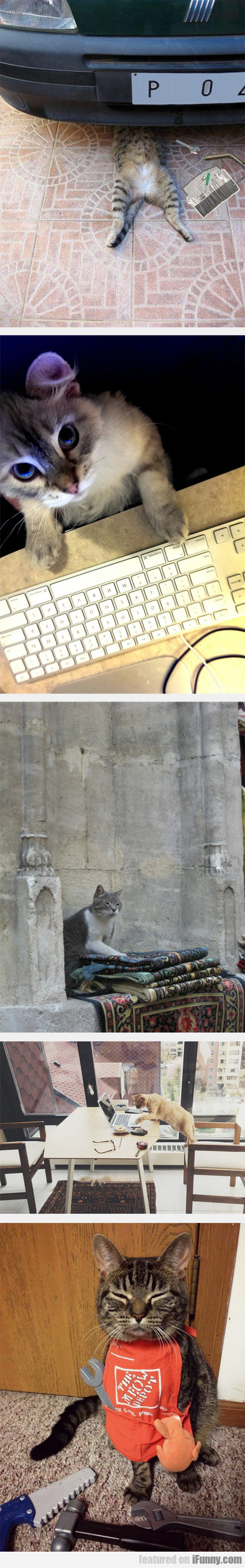 Cats And Their Professions