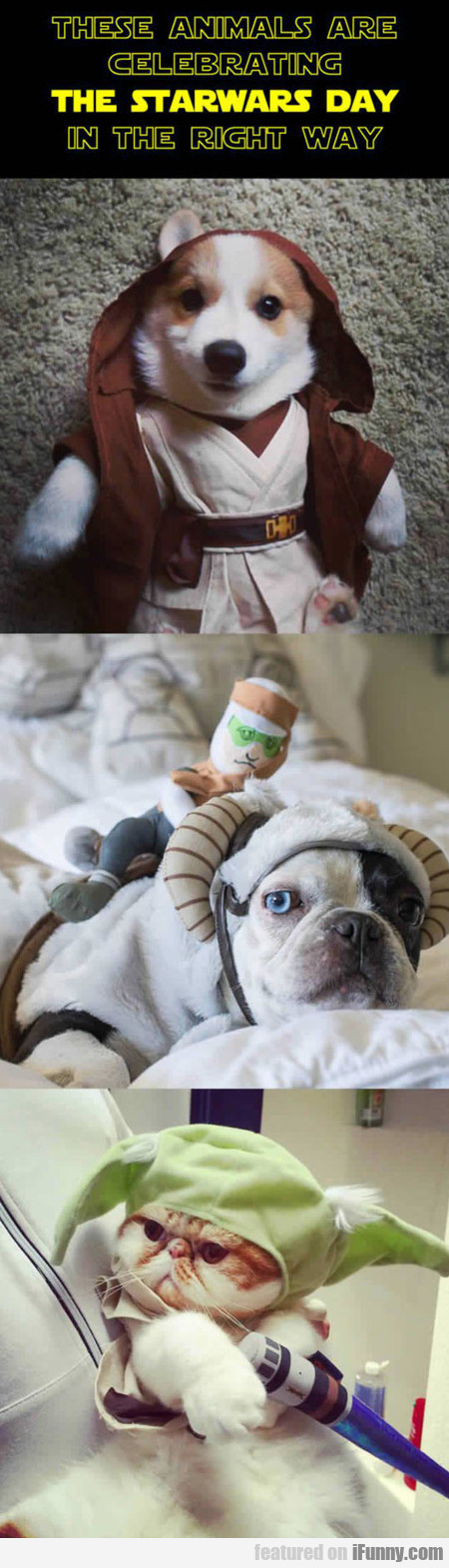 Animals Celebrating The Star Wars Day