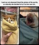 Not All Cats Want The Purrito