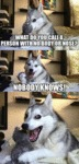 Pun Husky Can't Help It