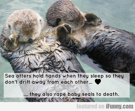 Sea Otters Hold Hands When They Sleep