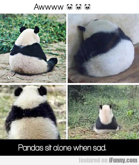 Pandas Sit Alone When Sad