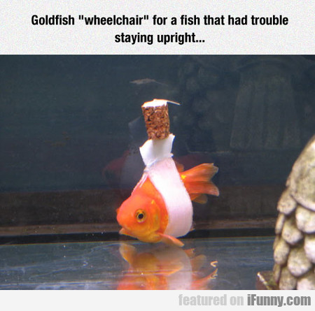 Helping A Handicapped Goldfish
