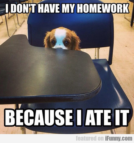 Puppy Goes To School