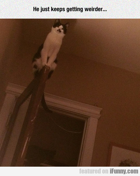 Cat Knows The Floor Is Lava