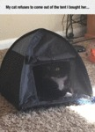My Cat Refuses To Come Out Of The Tent I Bought