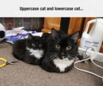 Different Types Of Cats