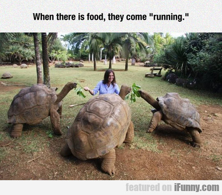 I Love Giant Turtles