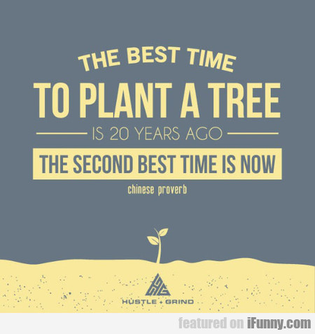 Best Time To Plant A Tree