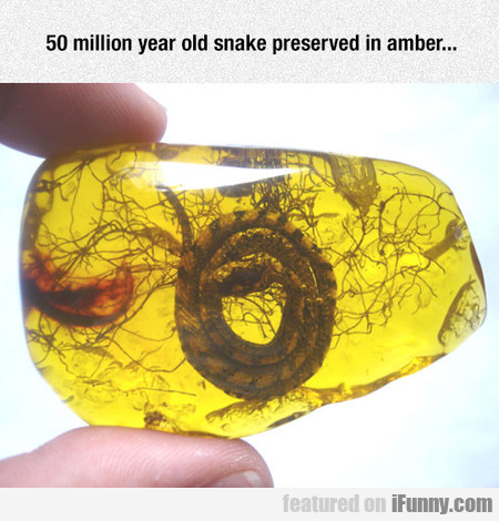 50 Million Year Old Snake Preserved In Amber...