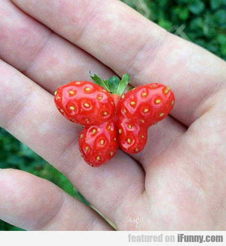 A Strawberry Shaped Like A Butterfly