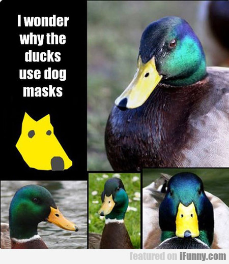 You Will Never Look At Them The Same Way Again