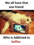This Cat Is So Addicted To Selfies