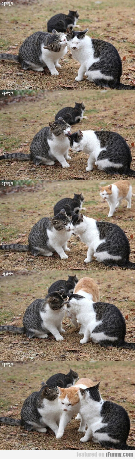 This Jealous Cat