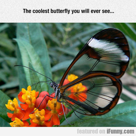 The coolest butterfly you will ever see