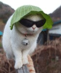 Just A Cat With A Lettuce Hat