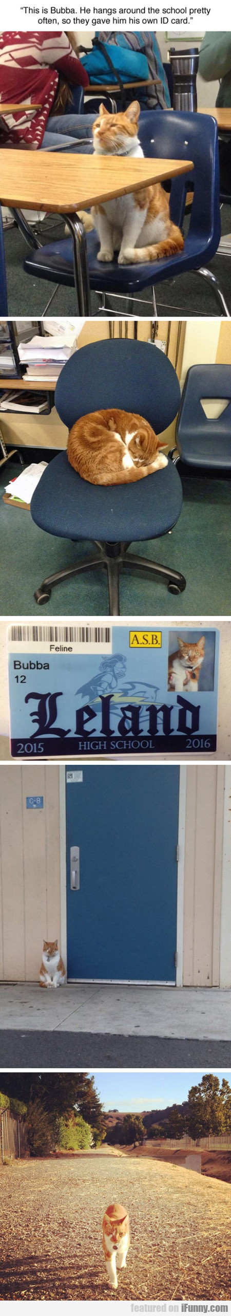 This Is Bubba and his own ID card