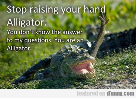 Stop It Alligator