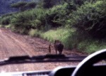 Timon And Pumba In Real Life