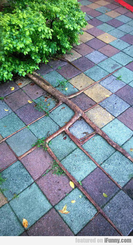 Awesome Square Roots