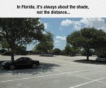 In Florida, It's Always About The Shades