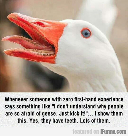 I'm So Afraid Of Geese