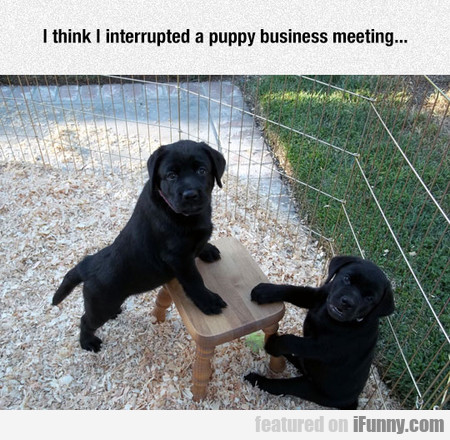 Puppy Business Meeting