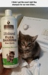 The Right Flea Shampoo