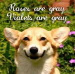 Dog Love Poems Are Not As Colorful