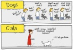 Dogs Vs. Cats In A Nutshell