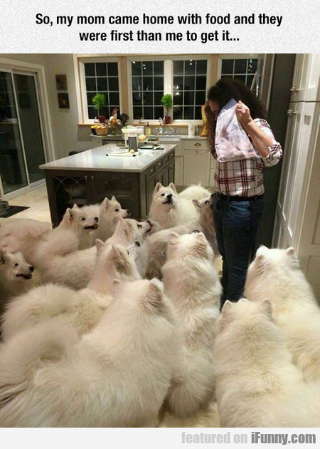 More Dogs Than You Can Handle