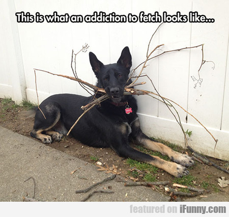 Addiction To Fetch