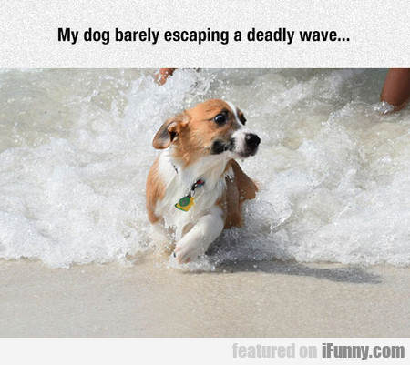 My Dog Barely Escaping A Deadly Wave...