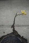A Simple Crack On The Ground Becomes Art