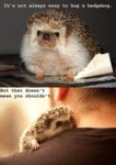 Being A Hedgehog