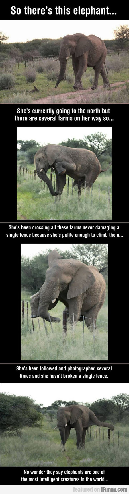 Elephants Are The Most Intelligent Creatures