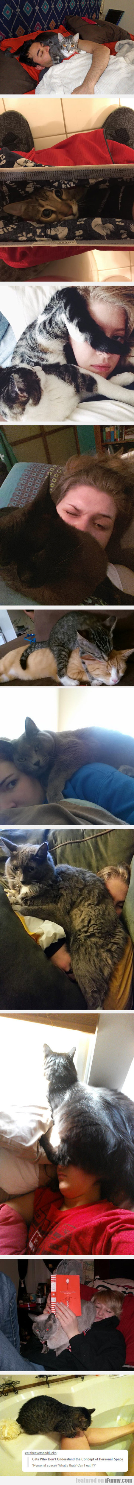 Cats Really Know How To Be Annoying