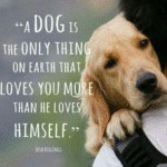 Truth About Dogs