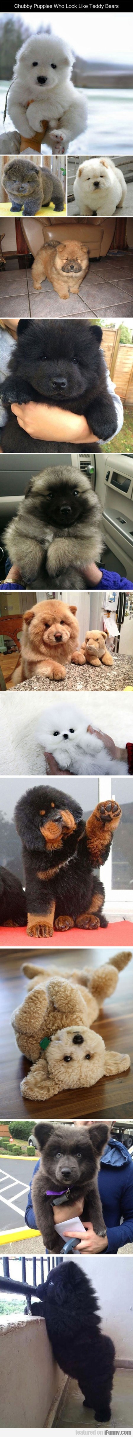 Some Puppies Who Look Like Teddy Bears