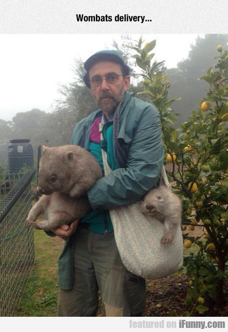 I Would Like Two Wombats Please
