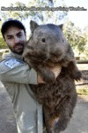 Now That Is A Big Wombat