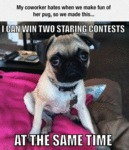 Truth About Pugs