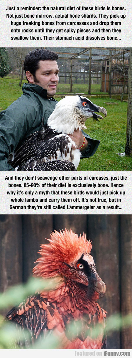 These Birds Are So Metal
