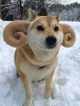 Doge Ram's New Model