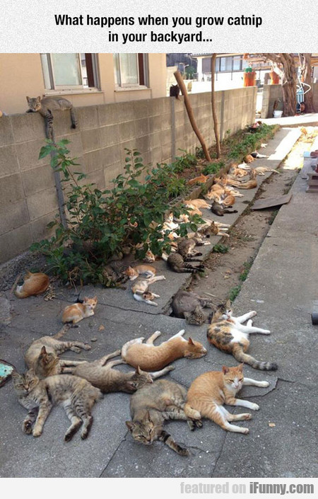 Catnip Brings All The Cats To The Yard