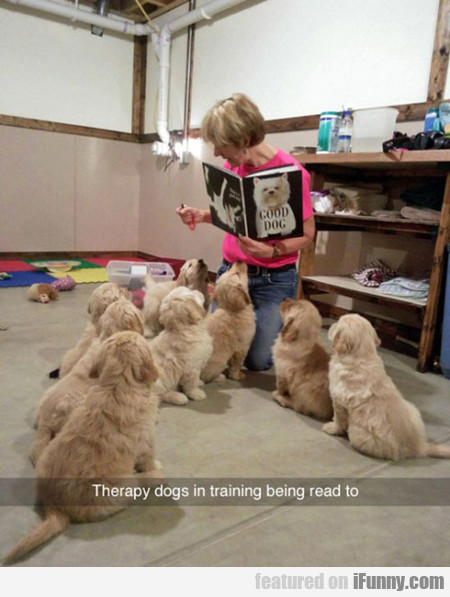 Therapy Puppies In Training
